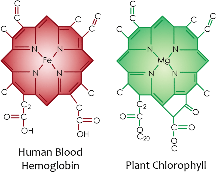 www.pngkit.com/downpic/u2w7u2u2t4e6o0e6_red-blood-cell-structure-of-chlorophyll-and-haemoglobin/.png